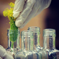 Dill in Flasche